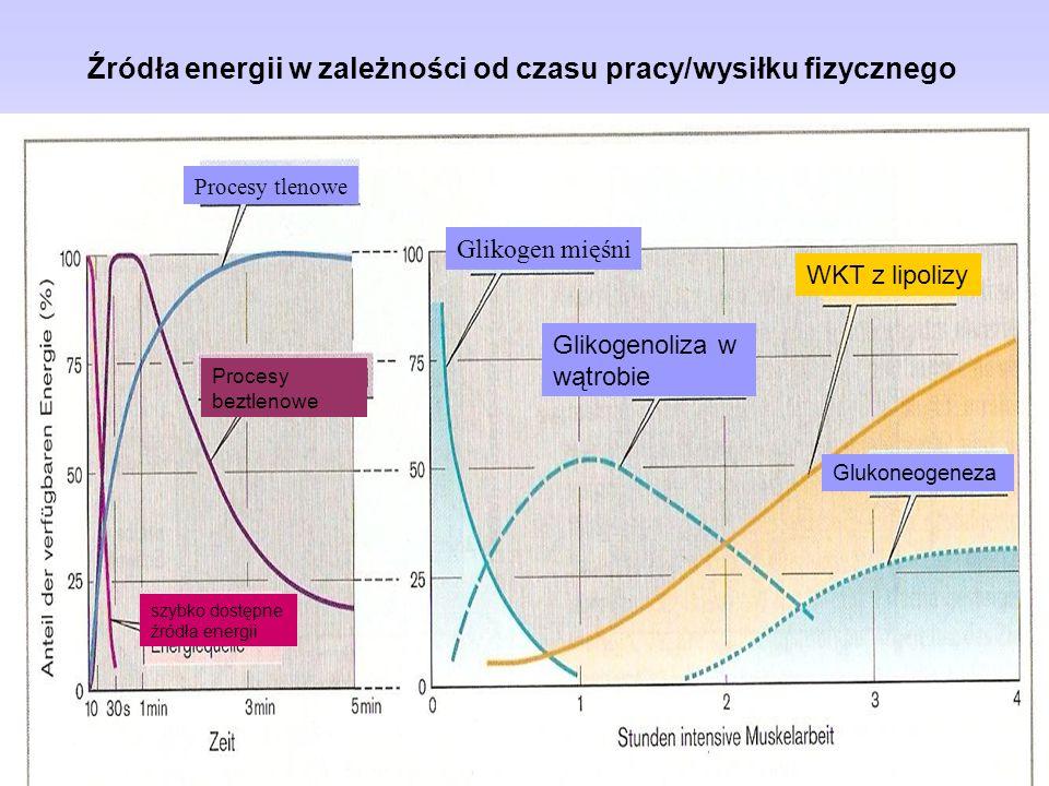 Procesy tlenowe Procesy beztlenowe szybko dostępne źródła energii Glikogen mięśni Glikogenoliza w wątrobie WKT z lipolizy Glukoneogeneza Źródła energi