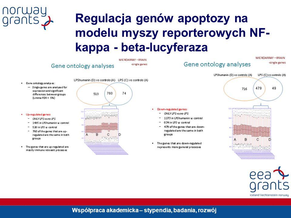 Współpraca akademicka – stypendia, badania, rozwój Regulacja genów apoptozy na modelu myszy reporterowych NF- kappa - beta-lucyferaza