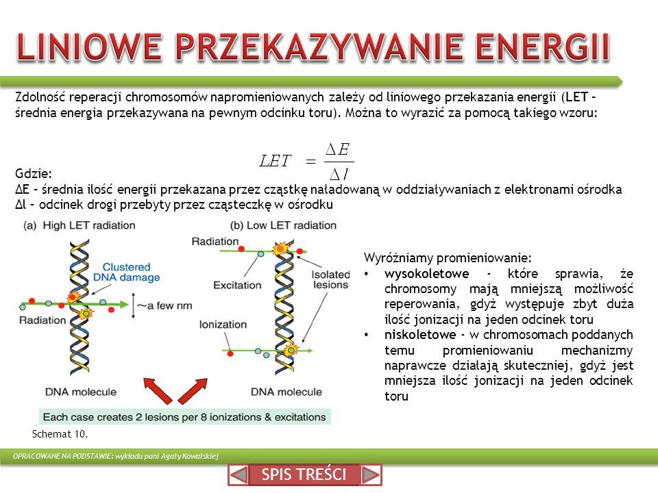 SPIS TREŚCI Zdolność reperacji chromosomów napromieniowanych zależy od liniowego przekazania energii (LET – średnia energia przekazywana na pewnym odc