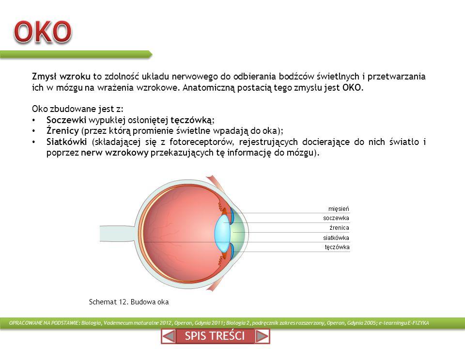 Zmysł wzroku to zdolność układu nerwowego do odbierania bodźców świetlnych i przetwarzania ich w mózgu na wrażenia wzrokowe. Anatomiczną postacią tego