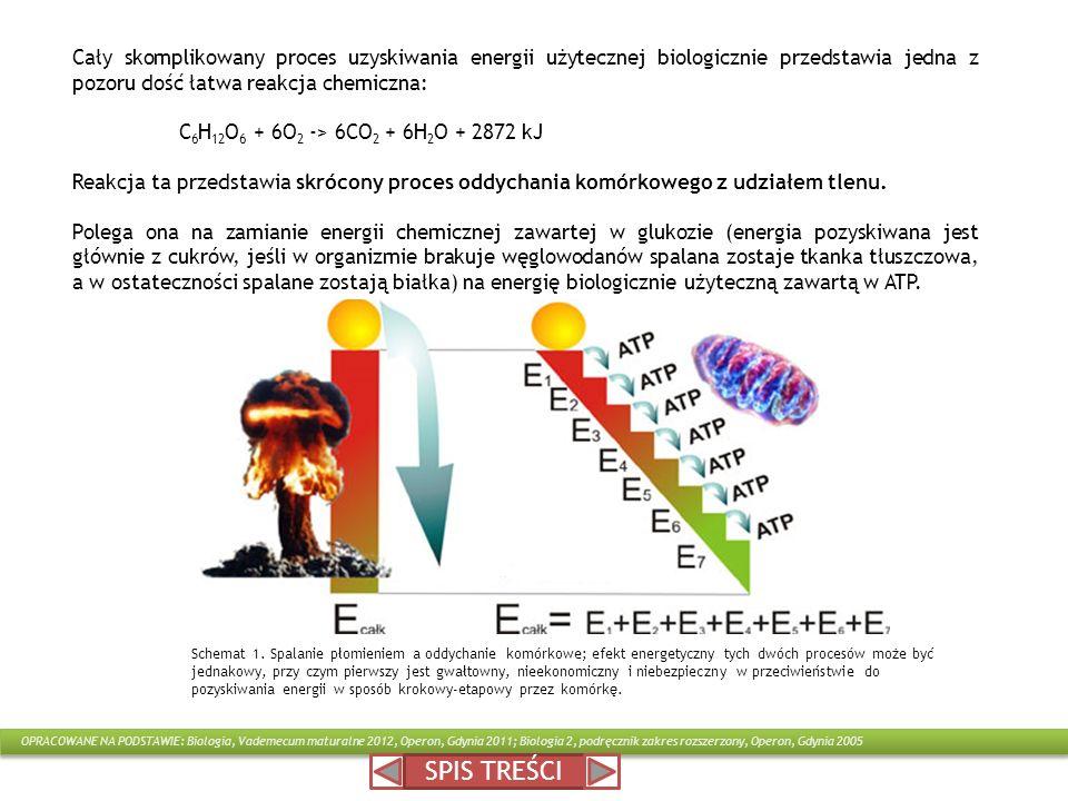 SPIS TREŚCI Cały skomplikowany proces uzyskiwania energii użytecznej biologicznie przedstawia jedna z pozoru dość łatwa reakcja chemiczna: C 6 H 12 O