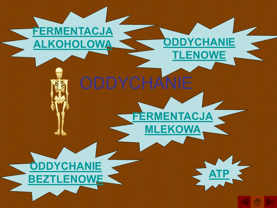 ODDYCHANIE ODDYCHANIE BEZTLENOWE ODDYCHANIE TLENOWE FERMENTACJA MLEKOWA FERMENTACJA ALKOHOLOWA ATP
