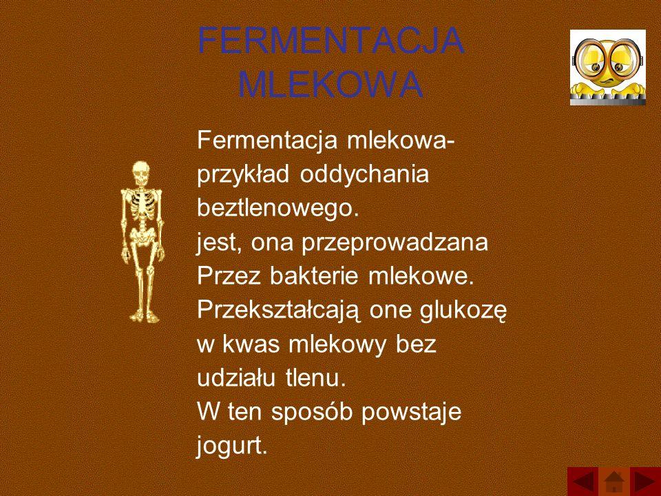 FERMENTACJA MLEKOWA Fermentacja mlekowa- przykład oddychania beztlenowego. jest, ona przeprowadzana Przez bakterie mlekowe. Przekształcają one glukozę