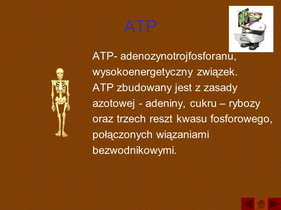 ATP ATP- adenozynotrojfosforanu, wysokoenergetyczny związek. ATP zbudowany jest z zasady azotowej - adeniny, cukru – rybozy oraz trzech reszt kwasu fo