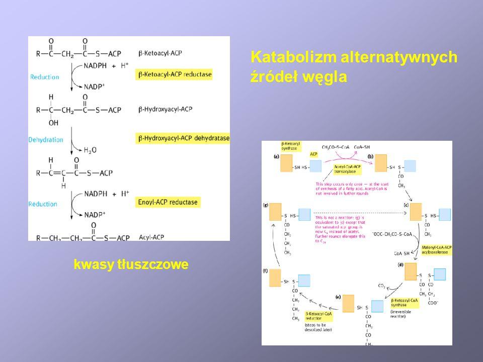 Donory i akceptory elektronów w katabolizmie drobnoustrojów chemolitotroficznych DonorAkceptorPrzykłady S 0 O 2 S 2 O 3 2- O 2 Thiobacillus, Sulfolobu