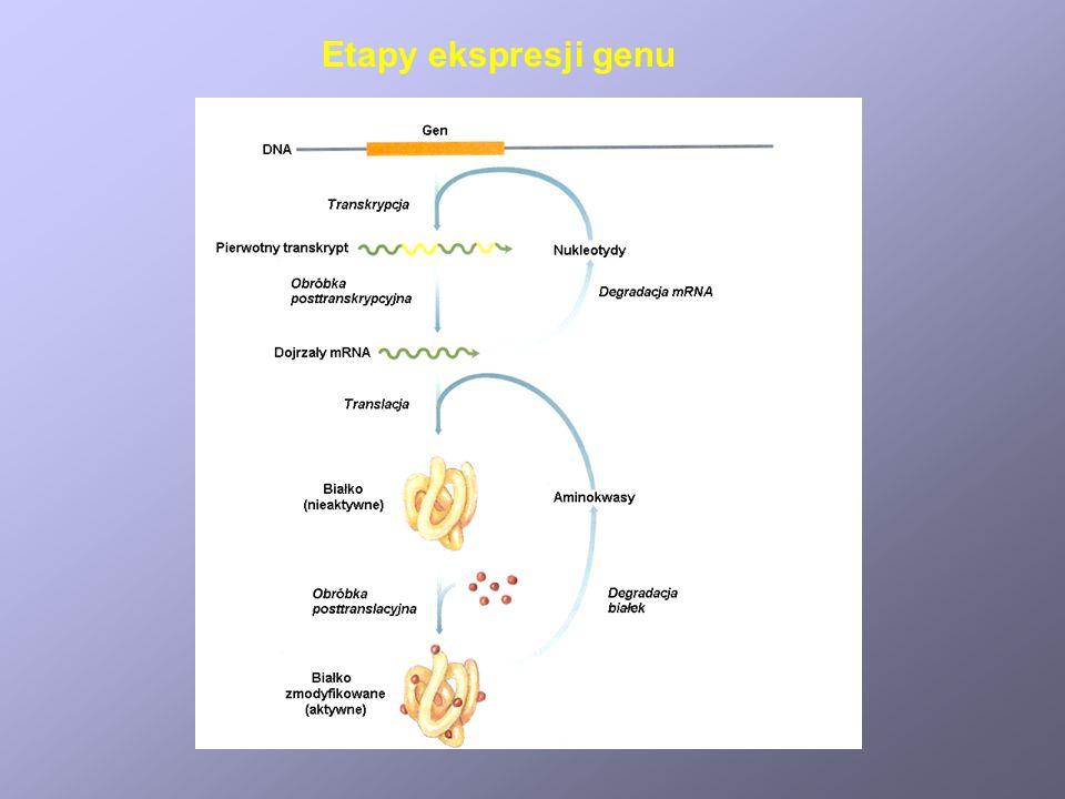 Regulacja metabolizmu drobnoustrojów Zasady podstawowe 1. Równowaga pomiędzy procesami wytwarzającymi i zużywającymi metabolity pośrednie 2. Energetyc