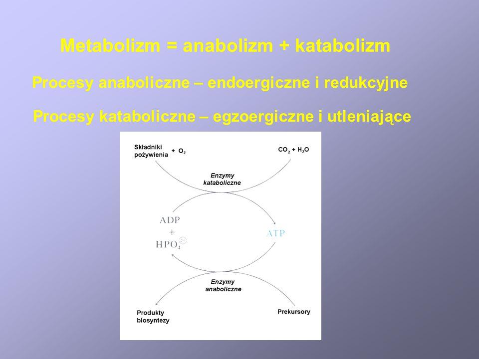 Metabolizm = anabolizm + katabolizm Procesy anaboliczne – endoergiczne i redukcyjne Procesy kataboliczne – egzoergiczne i utleniające