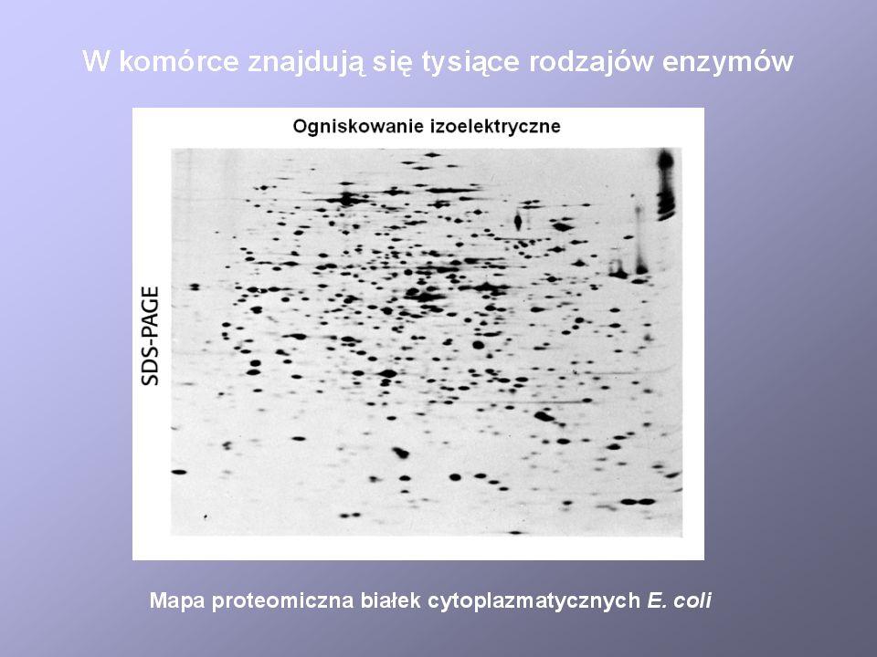 Regulacja ekspresji genów operonu lac