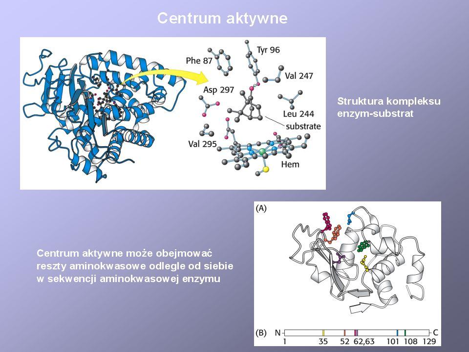 Dlaczego enzymy są tak efektywnymi katalizatorami? - grupy funkcyjne w centrum aktywnym - współdziałanie koenzymów - kataliza kwasowo-zasadowa - maksy