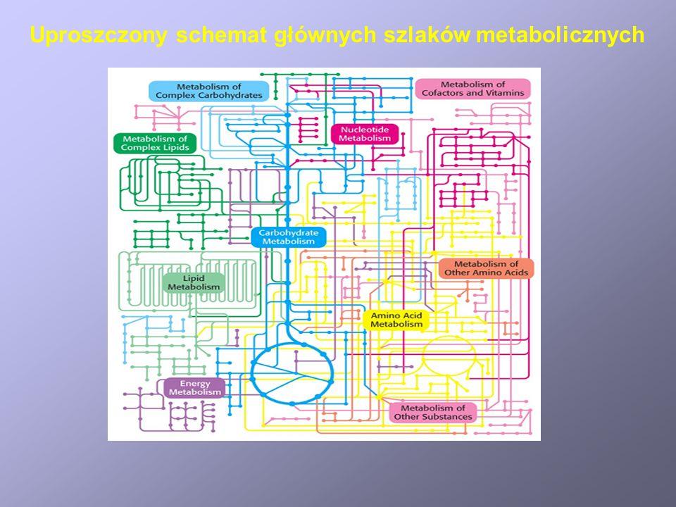 Uproszczony schemat głównych szlaków metabolicznych