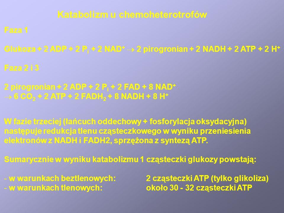Katabolizm u chemoheterotrofów Faza 1 Glukoza + 2 ADP + 2 P i + 2 NAD + 2 pirogronian + 2 NADH + 2 ATP + 2 H + Faza 2 i 3 2 pirogronian + 2 ADP + 2 P i + 2 FAD + 8 NAD + 6 CO 2 + 2 ATP + 2 FADH 2 + 8 NADH + 8 H + W fazie trzeciej (łańcuch oddechowy + fosforylacja oksydacyjna) następuje redukcja tlenu cząsteczkowego w wyniku przeniesienia elektronów z NADH i FADH2, sprzężona z syntezą ATP.