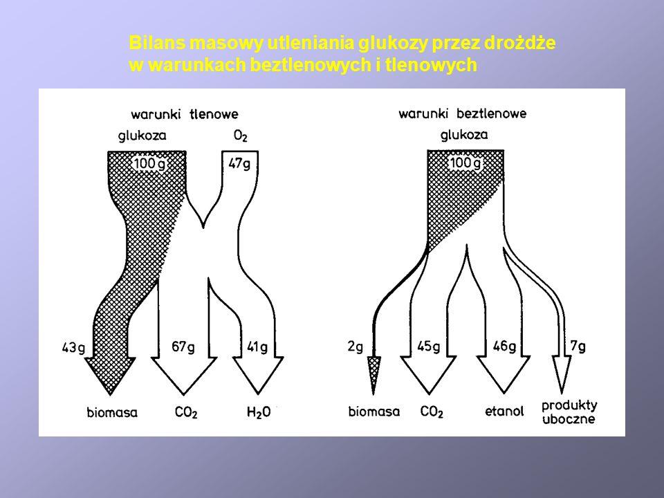 Katabolizm u chemoheterotrofów Faza 1 Glukoza + 2 ADP + 2 P i + 2 NAD + 2 pirogronian + 2 NADH + 2 ATP + 2 H + Faza 2 i 3 2 pirogronian + 2 ADP + 2 P