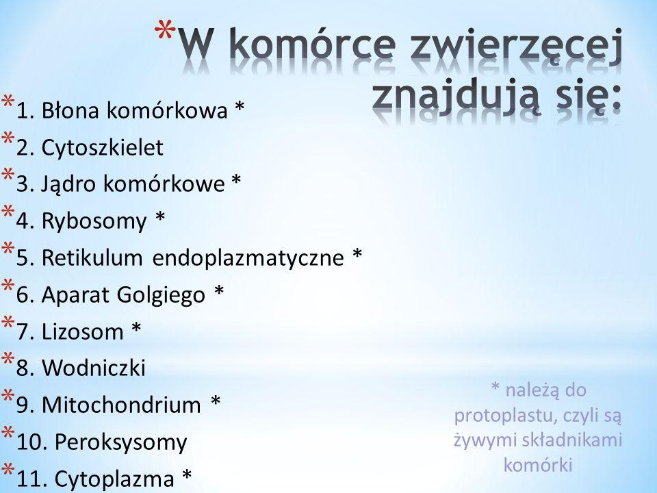 * Komórka eukariotyczna powstała później niż prokariotyczna.