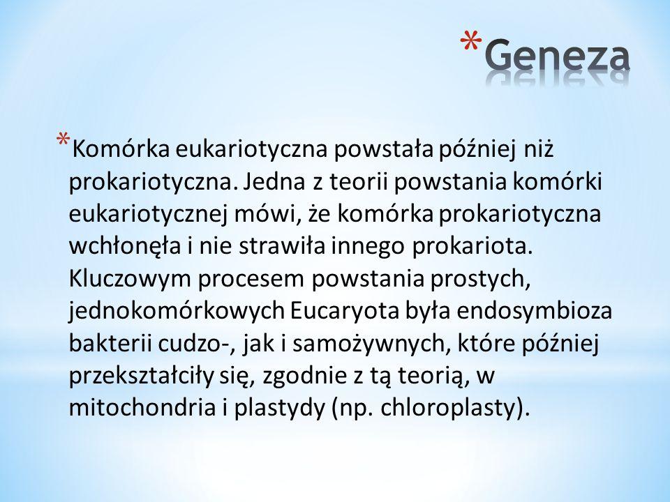 * Komórki zwierzęce (eukariotyczne) mają bardzo różne kształty – np.