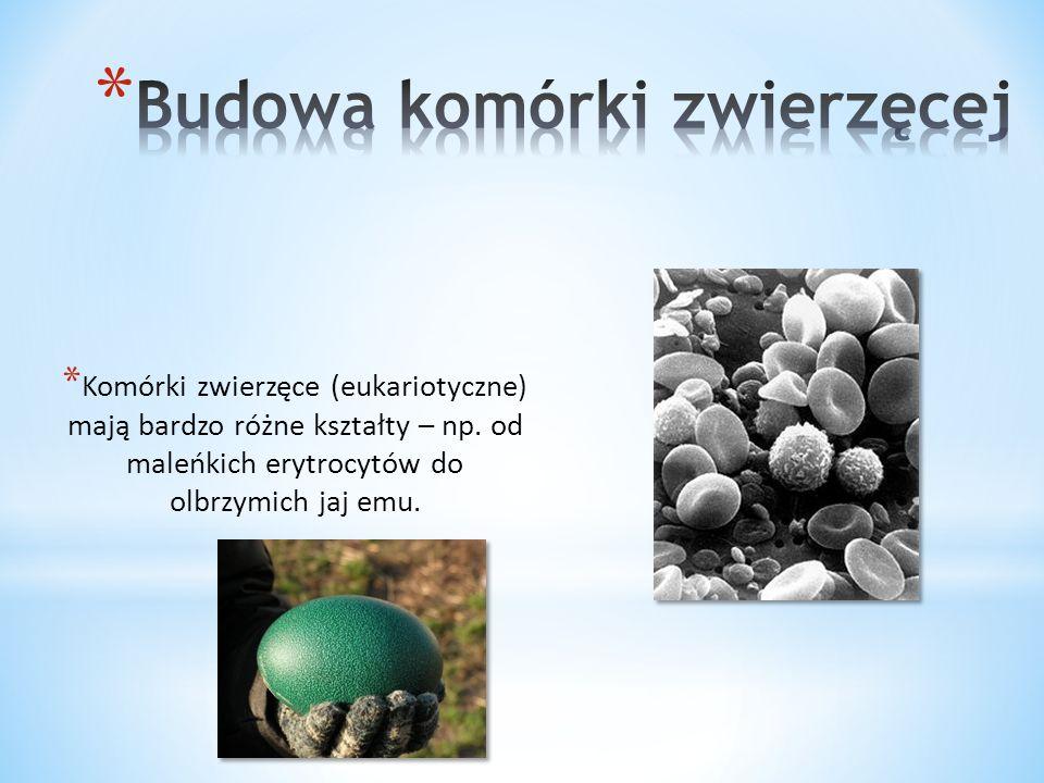 * Przeprowadzanie skomplikowanych reakcji chemicznych, związanych z trawieniem pokarmu i odzyskiwaniem składników odżywczych.