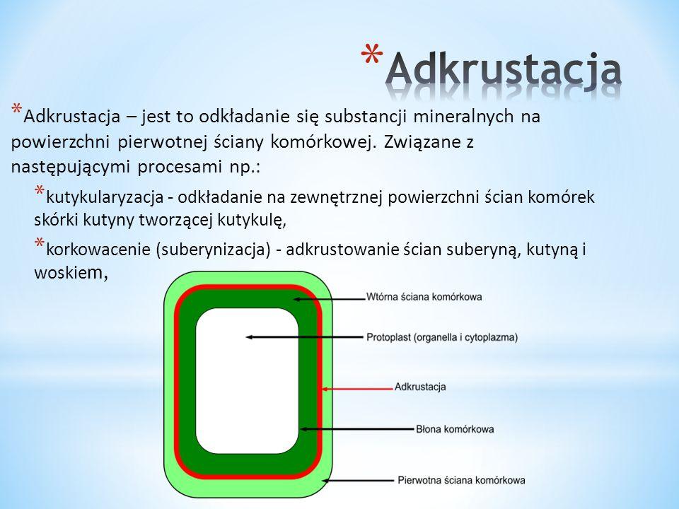 * Ściana komórkowa bakterii jest mechaniczną podporą zapobiegającą pękaniu bakterii spowodowanemu przez wysokie ciśnienie osmotyczne cytoplazmy.