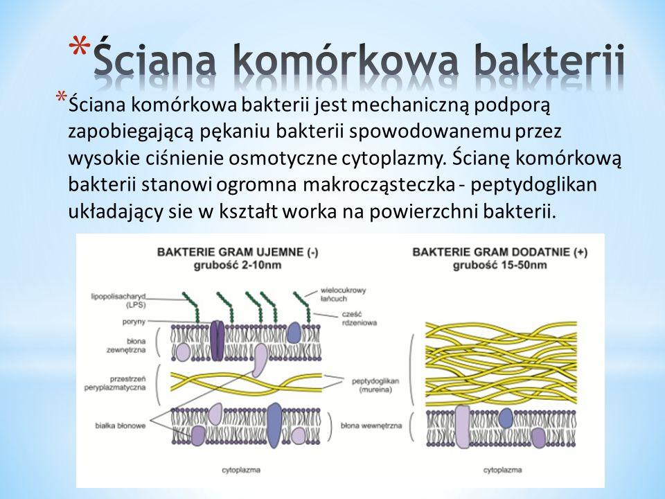 * Ściana komórkowa grzybów zbudowana jest głównie z chityny, która jest pochodną polisacharydów (glukozoamina).