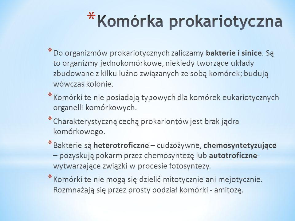 * Do organizmów prokariotycznych zaliczamy bakterie i sinice. Są to organizmy jednokomórkowe, niekiedy tworzące układy zbudowane z kilku luźno związan