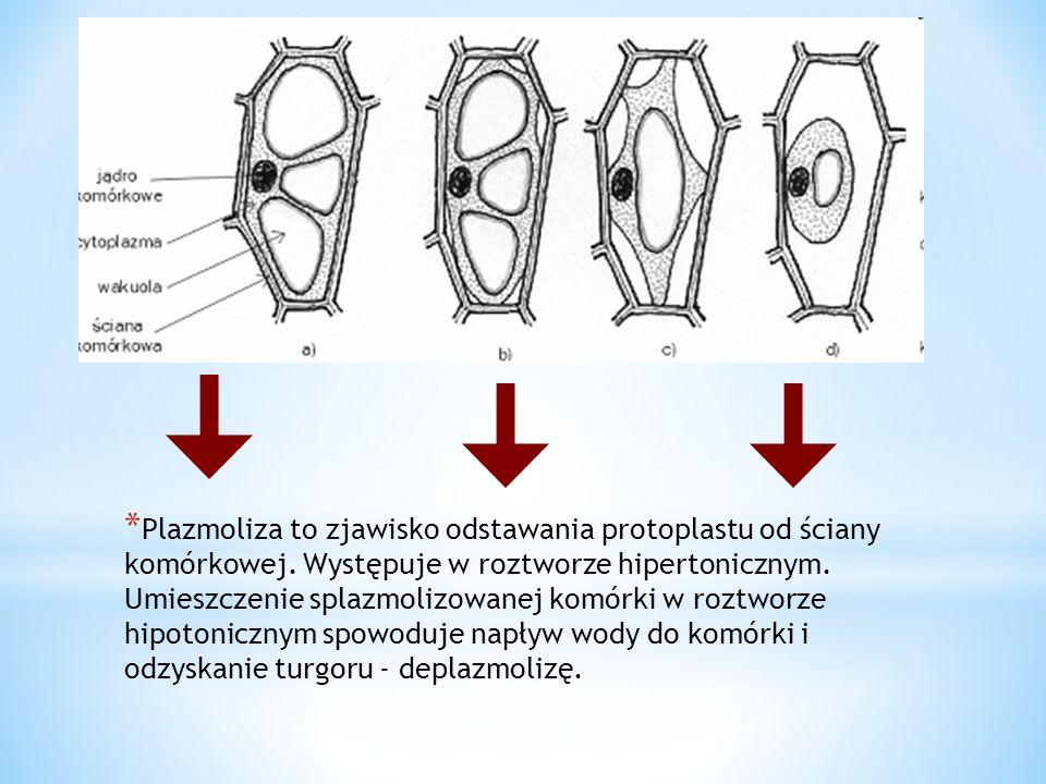 * Plazmoliza to zjawisko odstawania protoplastu od ściany komórkowej. Występuje w roztworze hipertonicznym. Umieszczenie splazmolizowanej komórki w ro