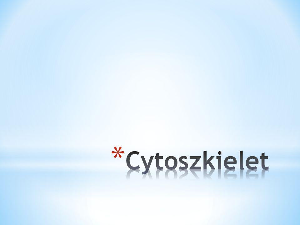 * Cytoszkielet jest dynamiczną siecią białkowych filamentów: * Mikrofilamenty * Filamenty pośrednie * Mikrotubule - tubulina