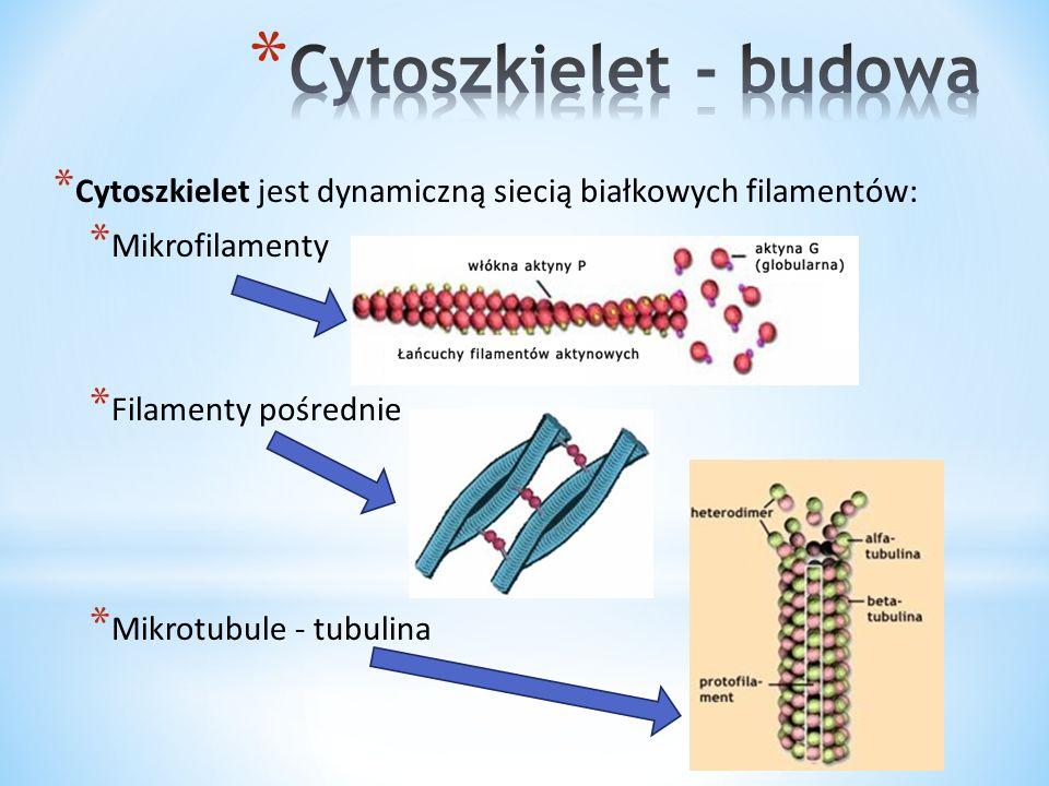 * Mikrofilamenty – zmiana kształtu i umożliwienie ruchu komórki * Filamenty pośrednie- chronią komórkę przed stresem mechanicznym * Mikrotubule- odpowiadają za organizację wnętrza komórki i transport