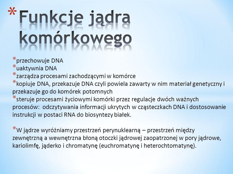 * przechowuje DNA * uaktywnia DNA * zarządza procesami zachodzącymi w komórce * kopiuje DNA, przekazuje DNA czyli powiela zawarty w nim materiał genet