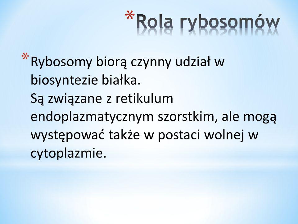 * Rybosomy biorą czynny udział w biosyntezie białka. Są związane z retikulum endoplazmatycznym szorstkim, ale mogą występować także w postaci wolnej w