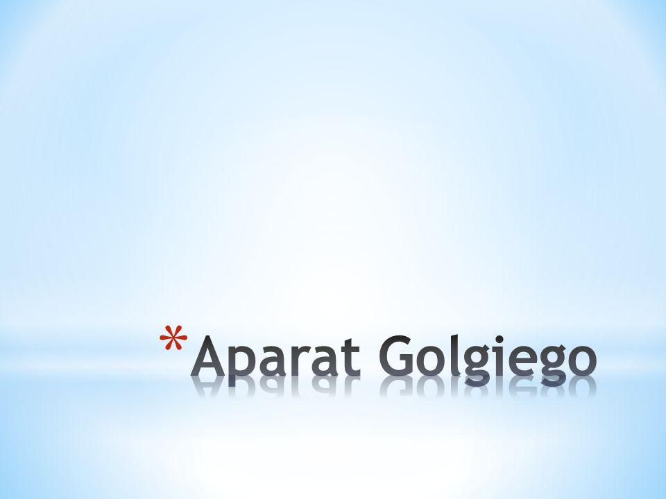 * Aparat Golgiego jest budowany przez gładkie błony plazmatyczne.