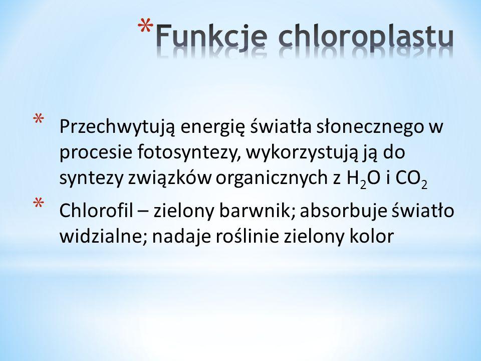 * Przechwytują energię światła słonecznego w procesie fotosyntezy, wykorzystują ją do syntezy związków organicznych z H 2 O i CO 2 * Chlorofil – zielo