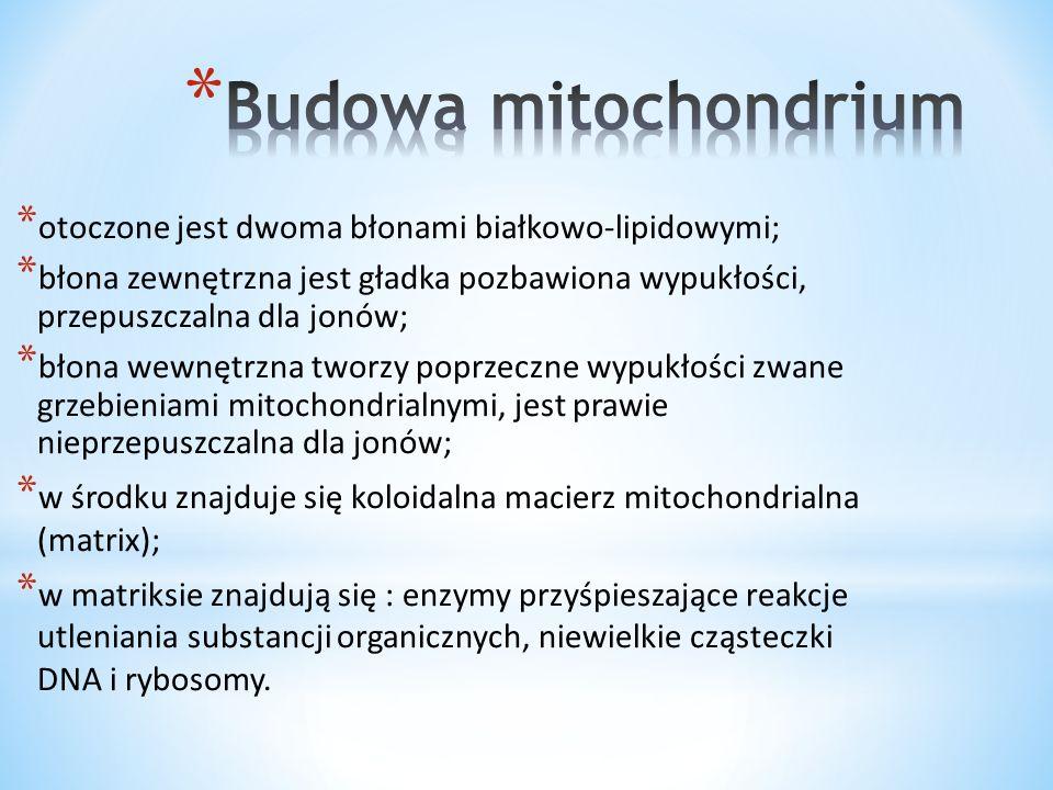 * W czasie endosymbiozy pierwotnej komórki eukariotyczne wchłonęły poprzez fagocytozę bakterie purpurowe.