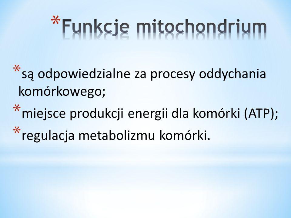 * są odpowiedzialne za procesy oddychania komórkowego; * miejsce produkcji energii dla komórki (ATP); * regulacja metabolizmu komórki.