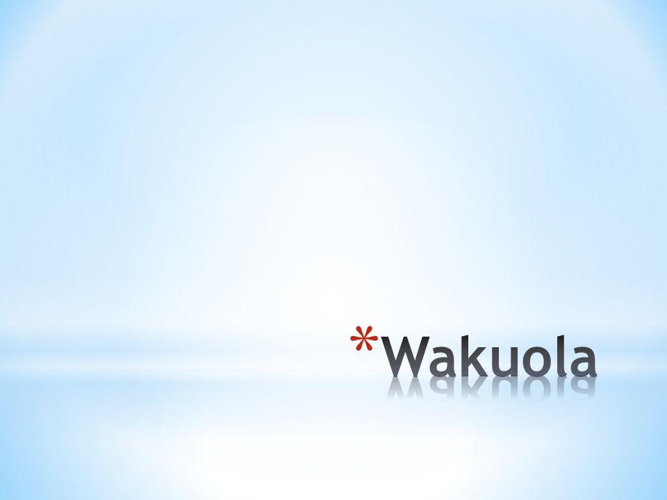 * Powstaje najczęściej z retikulum, aparatu Golgiego przez fragmentację dużej wakuoli.