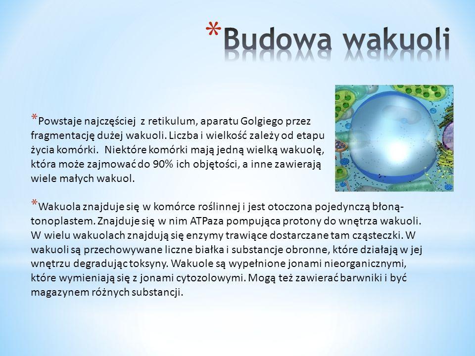 * Utrzymywanie komórki w turgorze (ciśnienie hydrostatyczne komórki roślinnej) * Regulacja gospodarki wodnej w roślinie * Akumulacja cukrów, białek zapasowych (czasowa lub trwała) * Detoksykacja cytoplazmy * Magazyn wody w komórce * Magazynowanie substancji, które mogą działać szkodliwie * Czasami trawienie wewnątrzkomórkowe
