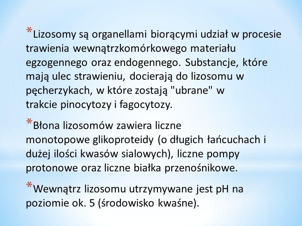* Z najważniejszych cech tych organelli należy również wymienić: * są wyłącznie eukariotyczne, przy czym trzeba dodać, że u roślin, ze względu na pewne różnice biochemiczne, nazywane są sferosomami * enzymy hydrolityczne, które wypełniają lizosomy, znajdują się w stanie latencji, oznacza to, że białkowe biokatalizatory są normalnie nieaktywne, ponieważ najprawdopodobniej związane są z białkami błon lizosomów * powstają jako lizosomy pierwotne z aparatów Golgiego lub retikulum gładkiego; po połączeniu z fagosomami powstają lizosomy wtórne * Rodzaje lizosomów: * trawienne- rozkład substancji * magazynujące- magazynują substancje * grabarze –rozkład obumarłych składników cytoplazmy.
