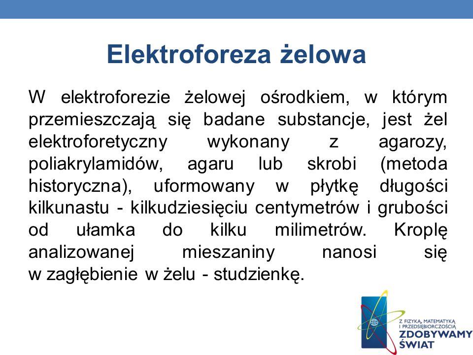 Elektroforeza żelowa W elektroforezie żelowej ośrodkiem, w którym przemieszczają się badane substancje, jest żel elektroforetyczny wykonany z agarozy,