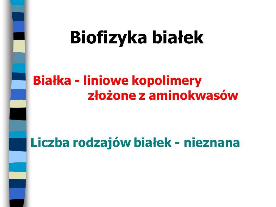 Biofizyka białek Białka - liniowe kopolimery złożone z aminokwasów Liczba rodzajów białek - nieznana