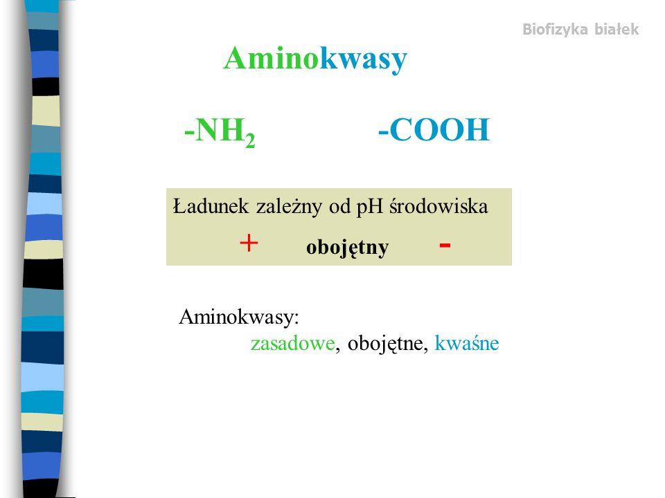 Aminokwasy -NH 2 -COOH Ładunek zależny od pH środowiska + obojętny - Aminokwasy: zasadowe, obojętne, kwaśne