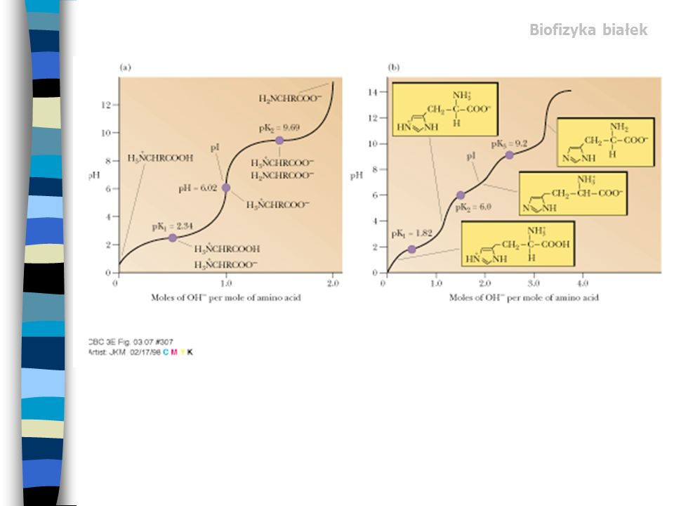 Biofizyka białek