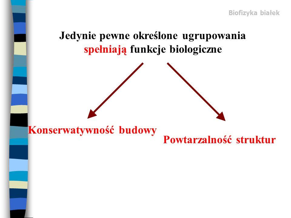 Biofizyka białek Jedynie pewne określone ugrupowania spełniają funkcje biologiczne Konserwatywność budowy Powtarzalność struktur