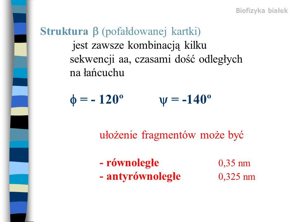Biofizyka białek Struktura (pofałdowanej kartki) jest zawsze kombinacją kilku sekwencji aa, czasami dość odległych na łańcuchu = - 120º = -140º ułożen