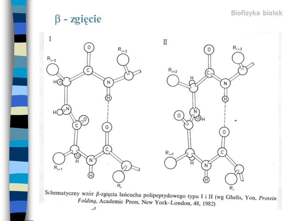 Biofizyka białek - zgięcie