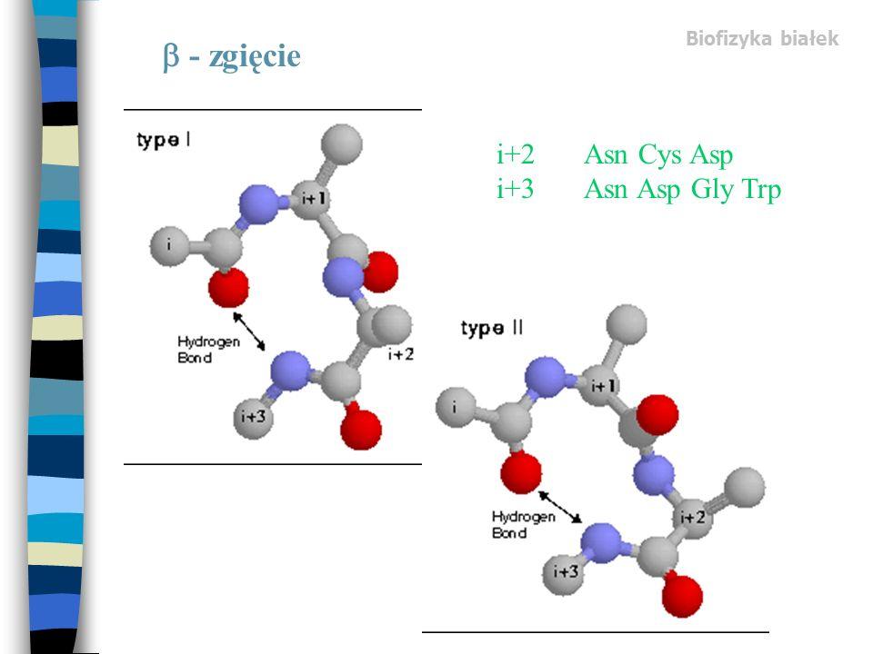 Biofizyka białek - zgięcie i+2Asn Cys Asp i+3Asn Asp Gly Trp