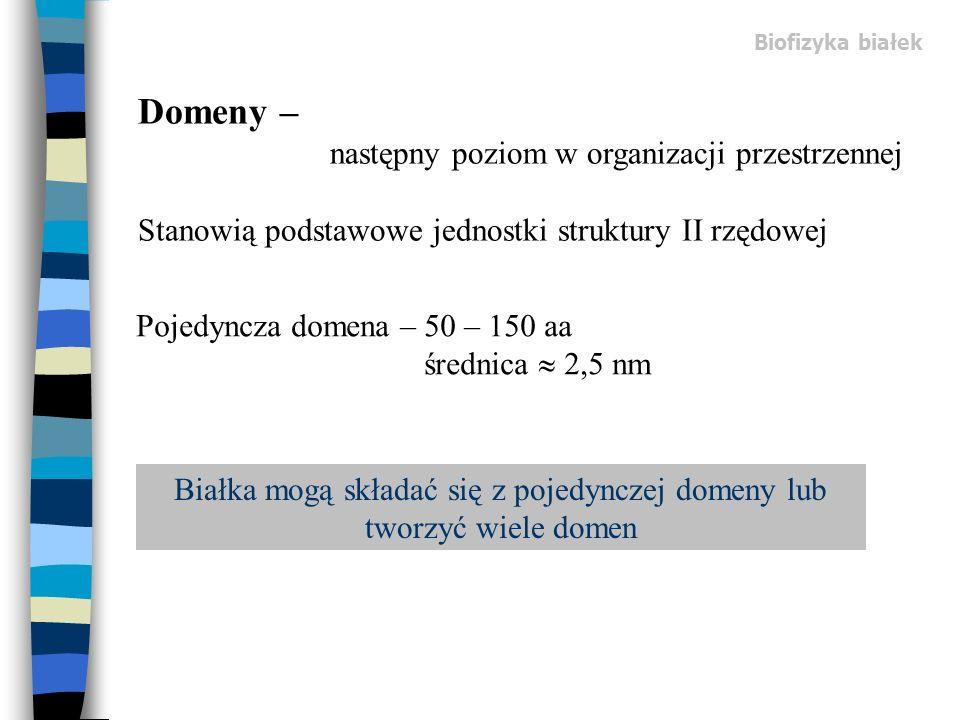 Domeny – następny poziom w organizacji przestrzennej Stanowią podstawowe jednostki struktury II rzędowej Pojedyncza domena – 50 – 150 aa średnica 2,5