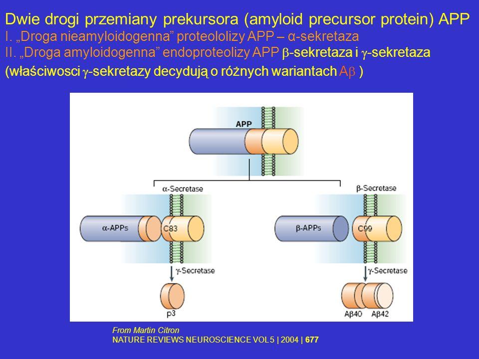 Dwie drogi przemiany prekursora (amyloid precursor protein) APP I. Droga nieamyloidogenna proteololizy APP – α-sekretaza II. Droga amyloidogenna endop
