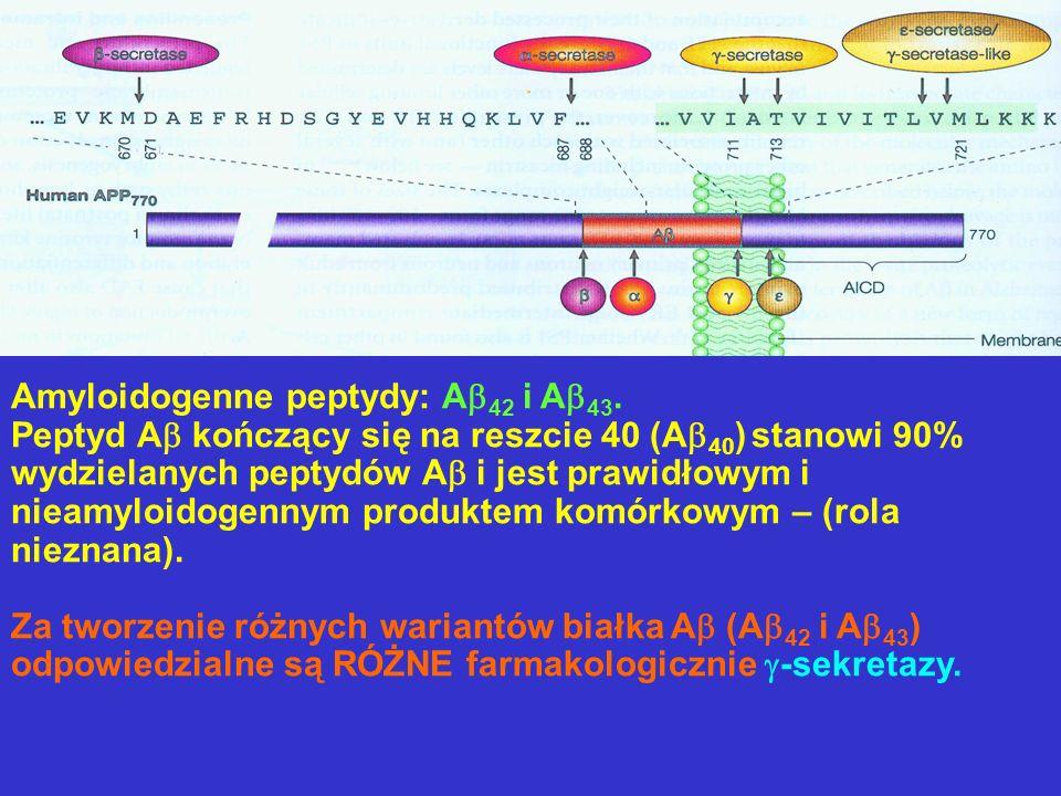 Amyloidogenne peptydy: A 42 i A 43. Peptyd A kończący się na reszcie 40 (A 40 ) stanowi 90% wydzielanych peptydów A i jest prawidłowym i nieamyloidoge