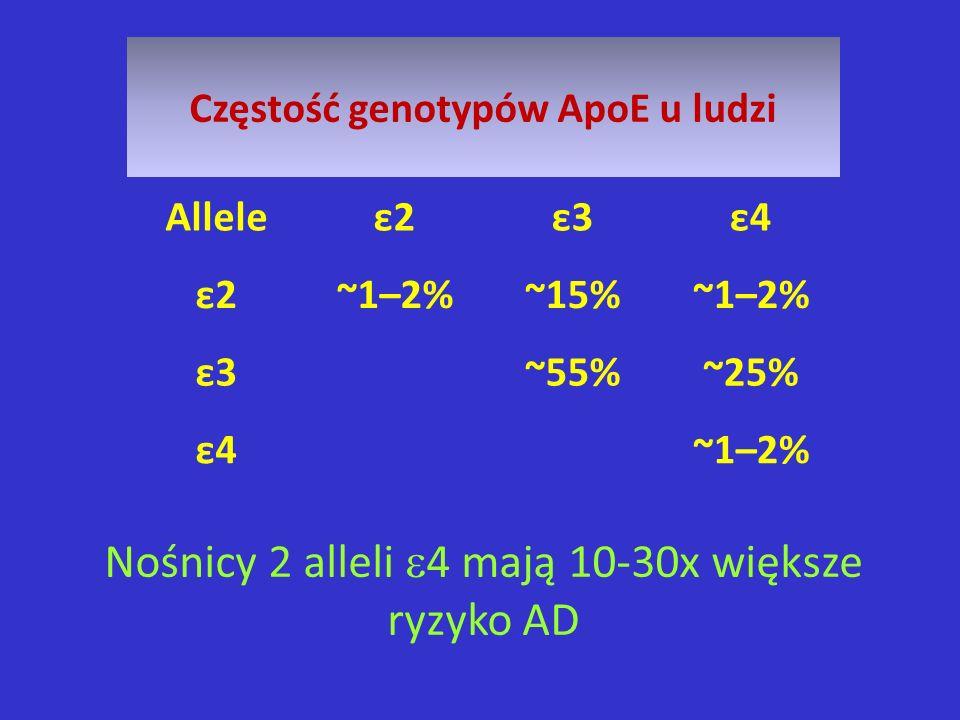 Nośnicy 2 alleli 4 mają 10-30x większe ryzyko AD Częstość genotypów ApoE u ludzi Alleleε2ε3ε4 ε2~1–2%~15%~1–2% ε3~55%~25% ε4~1–2%