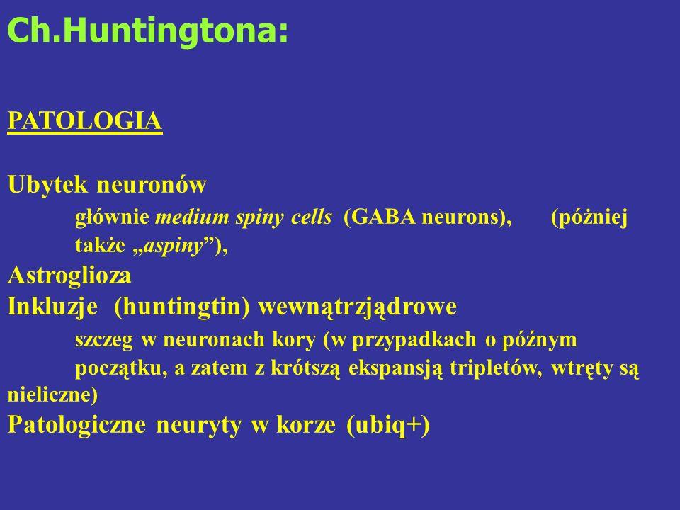 Ch.Huntingtona: PATOLOGIA Ubytek neuronów głównie medium spiny cells (GABA neurons), (póżniej także aspiny), Astroglioza Inkluzje (huntingtin) wewnątr