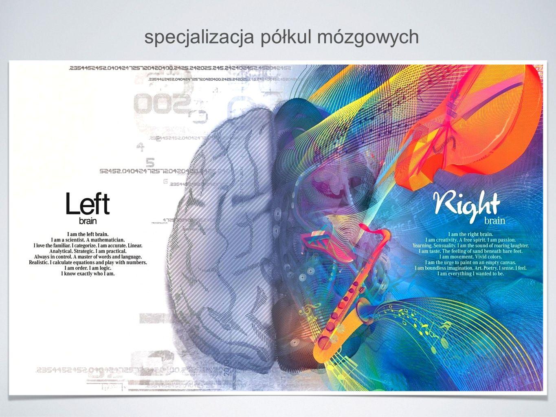 specjalizacja półkul mózgowych
