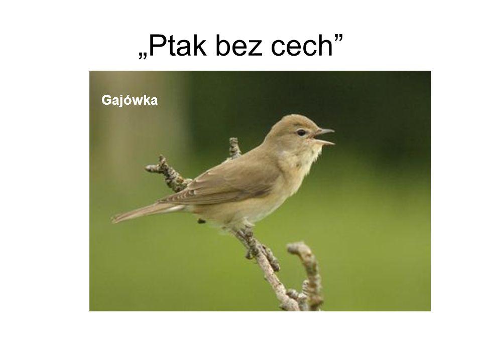 Ptak bez cech Gajówka