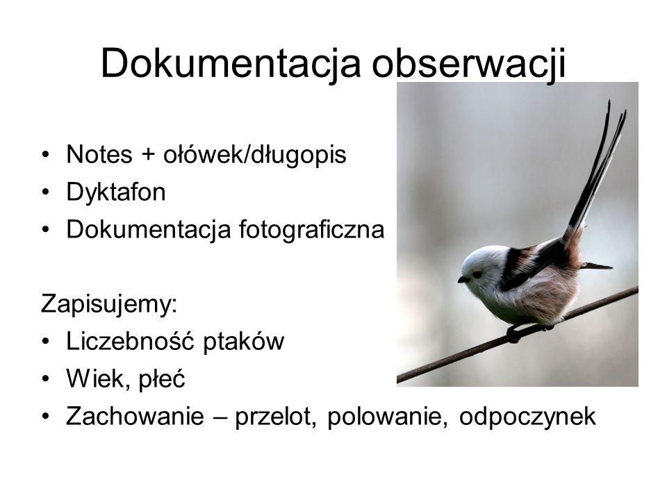 Dokumentacja obserwacji Notes + ołówek/długopis Dyktafon Dokumentacja fotograficzna Zapisujemy: Liczebność ptaków Wiek, płeć Zachowanie – przelot, pol